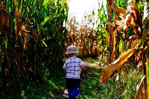 kid on the corn maze | Lift Legal