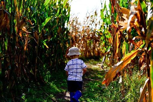 kid on the corn maze | Lift Legal