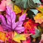 fall leaves colourful | Lift Legal