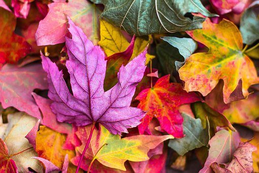 fall leaves colourful | Lift Legal